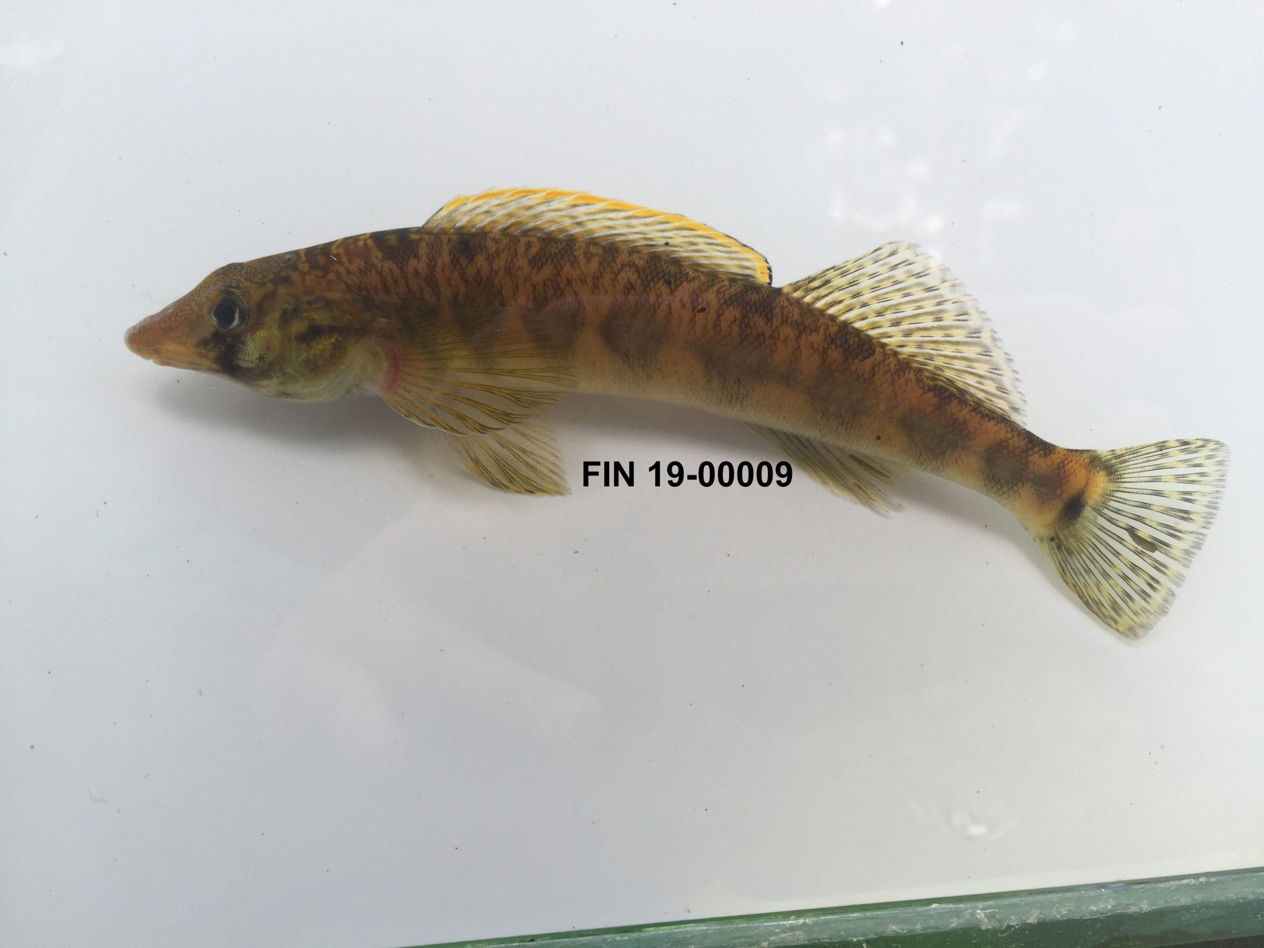 fin_19-00009